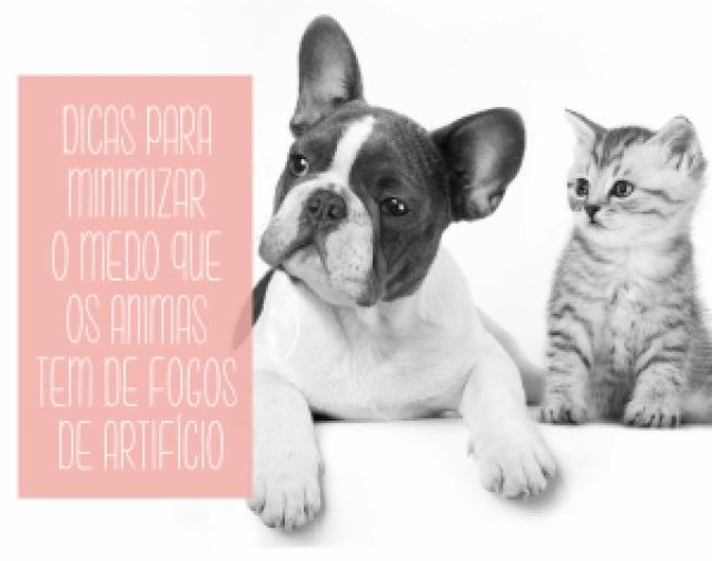 cachorro, gatos, medo, barulho, como cuidar, cuidado